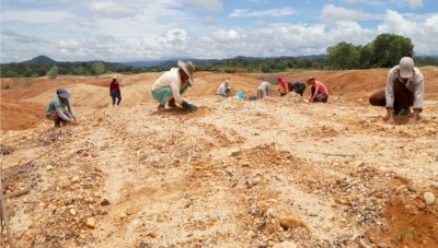 Tree-Planting Project in Mining-Destroyed Areas in Antioquia