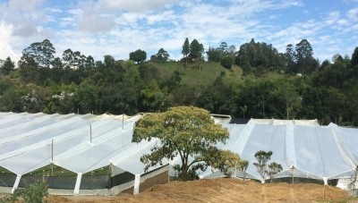 PharmaCielo Greenhouses in Rionegro, Antioquia