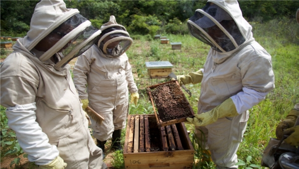 USAID-Mineros SA Beekeeping Aid Project Helps Convert Irregular Gold Miners
