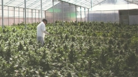 PharmaCielo Wins Colombian License for Medical Marijuana Manufacture