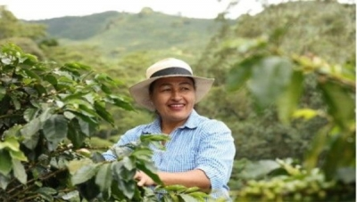 Antioquia's Coffee Growers Win Protocol for Safe Harvesting