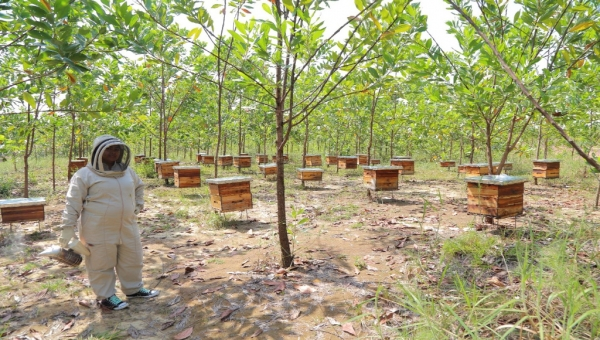 USAID, Antioquia Governments Team-up on Reforestation, Beekeeping on Lands Wrecked by Illegal Mining
